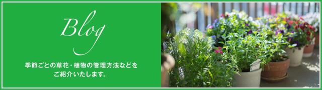 Blog 季節ごとの草花・植物の管理方法などをご紹介いたします。