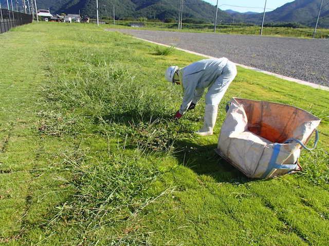 植栽年間管理